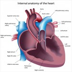 Pulmonary Hypertension and heart failure