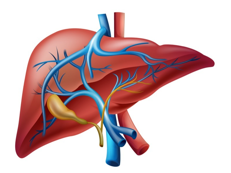 Pulmonary Hypertension's Link To Hepatic Cirrhosis Explored in New Study