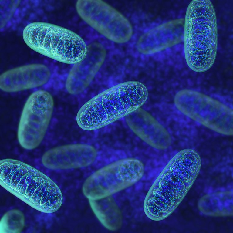 Mitochondrial transplant in PH