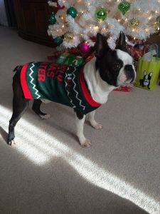 Sammy is ready for the holidays- are you?