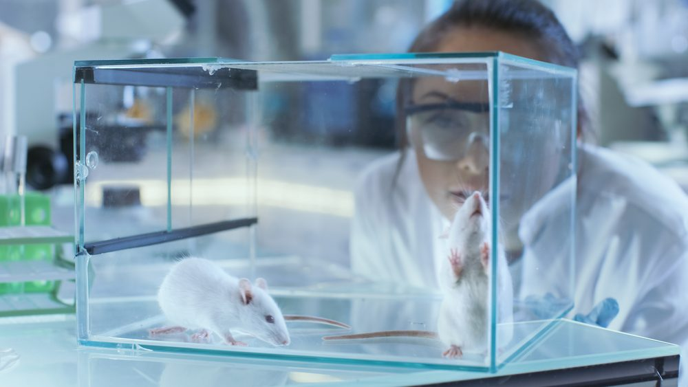 Researcher looking at rats.