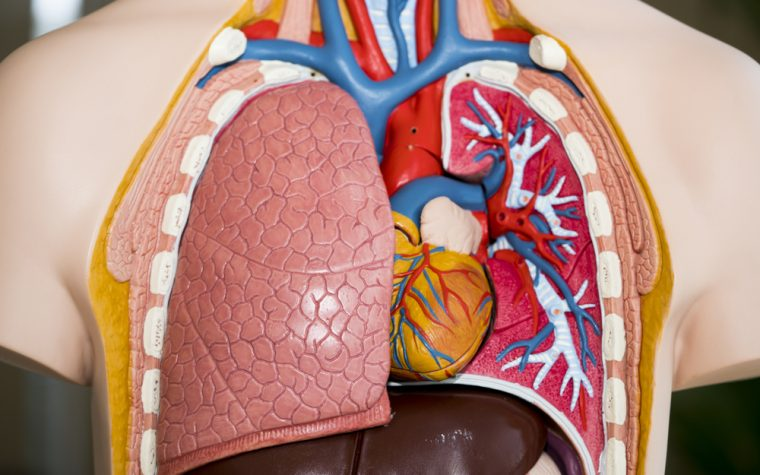 Apelin Improves Pulmonary and Cardiac Functions in PAH Patients, Clinical Trial Shows