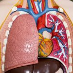 pulmonary health and hormones