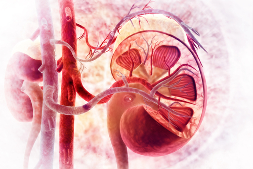 Levosimendan Aids Kidneys in PH Patients with Heart Disease and Renal Impairment, Phase 3 Data Show
