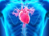 CTEPH Patients Can Develop Coronary-Pulmonary Collateral Vessels, According To Study